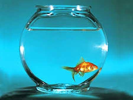 Boccia per i pesci m nica gon alves for Boccia pesci